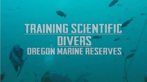 dive training video
