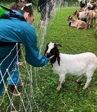 Goat Meet & Greet