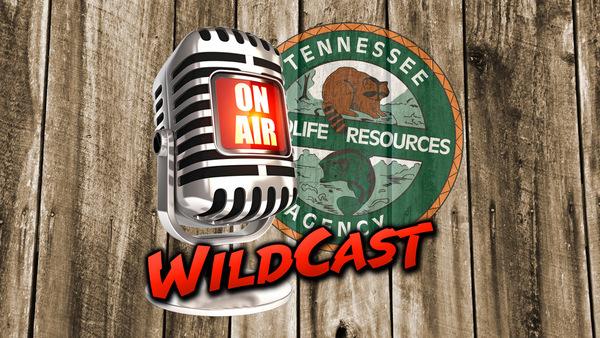 Wildcast Logo