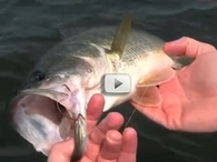 Through-the-gill Hook Removal Video