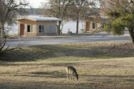 rock cabin with lake behind, deer in foreground