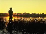 duck hunter by marsh, dawn