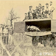 old photo: crowd watching deer leap to freedom