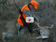 hunter placing tag on deer carcass