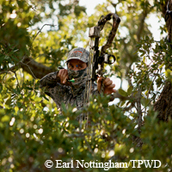 bow hunter peeking through trees