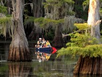 family paddling canoe among cypress trees