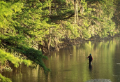man wade fishing in pristine river