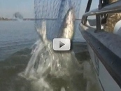 close up catfish in net along boat side