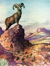 illustration bighorn sheep in desert
