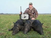 hunter with three feral hog harvest