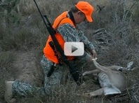 hunter in camo tags harvested deer