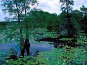 swamp, Sheldon Lake