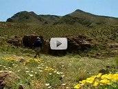 hiker, mountain meadow