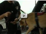 dog and handler leaving car