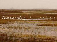 marshy coast with birds wading
