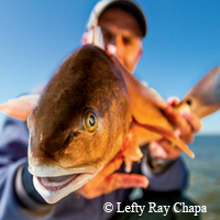 redfish closeup, angler in background