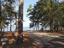 lakeside camp site, pine trees
