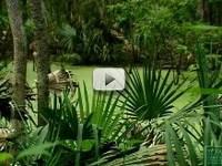 swampy scene