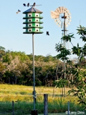 purple martin house on pole near windmill