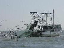 shrimp boat underway, nets, seagulls