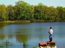 lone man fishing, tranquil lake in woods