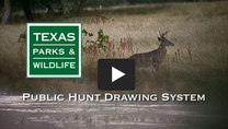 Drawn Hunt Video Still