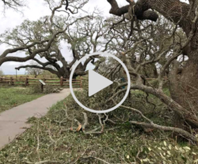 The Big Tree post -Harvey video link