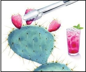 prickly pear fruit and pink beverage
