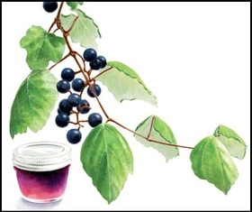 mustang grape vine and jelly