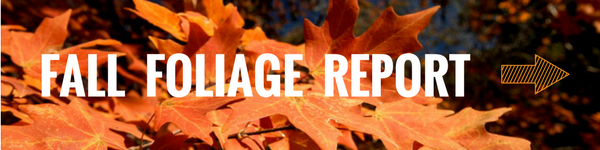 Fall foliage report link