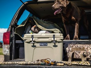 Retriever in truck bed with YETI cooler