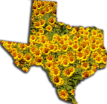 Texas with Sun Flowers