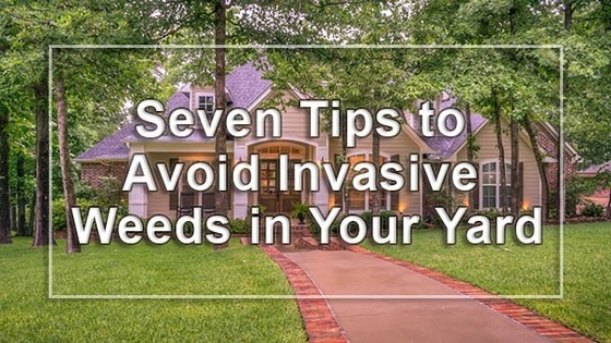 Seven Tips to Avoid Invasive Weeds in Your Yard