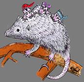 possum talks