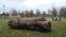 Tree Trunk-Gloucester Park
