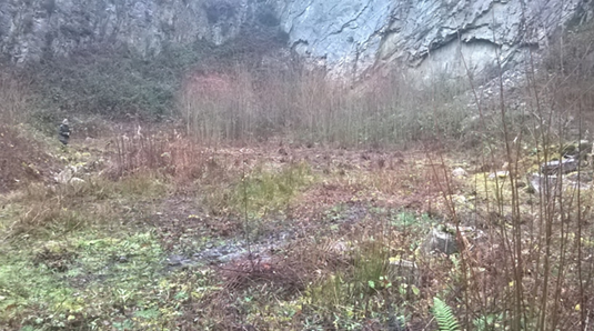 Poles Coppice Clearance