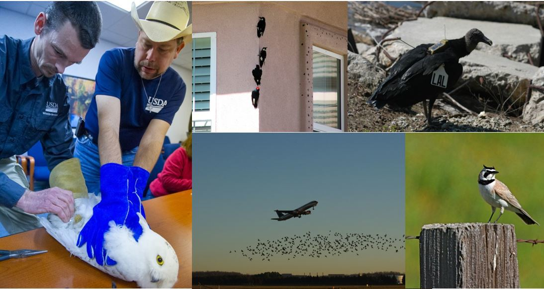 bird-collage_original.jpg