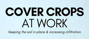 Cover Crop graphic image