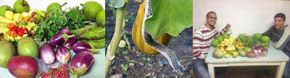 Photos of: People's Garden July harvest bounty; endemic PR boa in garden; Mayaguez interns sorting produce.