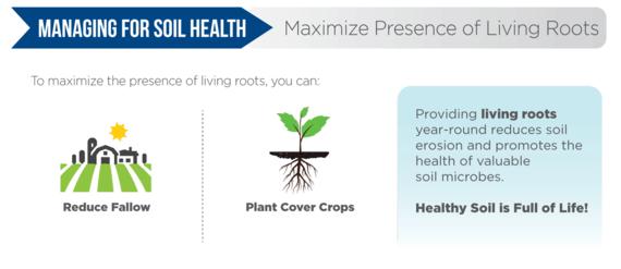 Maximize Living Roots