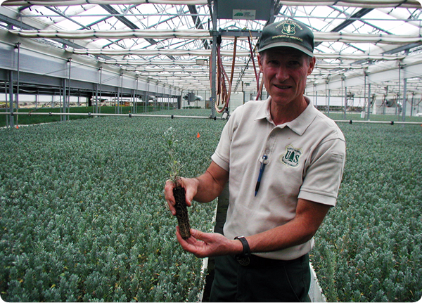 Lucky Peak Nursery assistant nursery manager John Sloan shows off a one-year old container-grown sagebrush seedling in Idaho