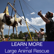 Learn more on large animal rescue