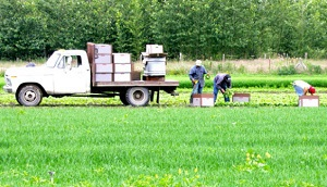 Farmworkers on foot are at risk of being backed over by a farm vehicle.
