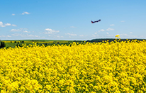 An image of a plane flying over a canola field.