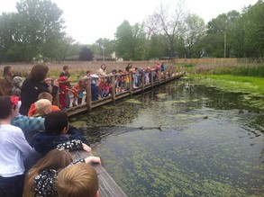 students releasing ducks in wetland