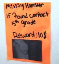 Hamster Missing
