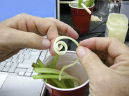 planting celery