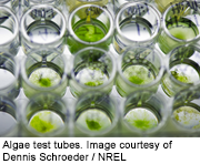 Algae Cultures, NREL