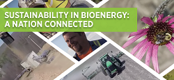 Sustainabilty in Bioenergy: Cover Photo