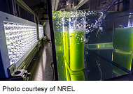 Algae research and development